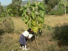 En af de skolens elever vander et ungt teaktræ i skovhaven_Prioritet